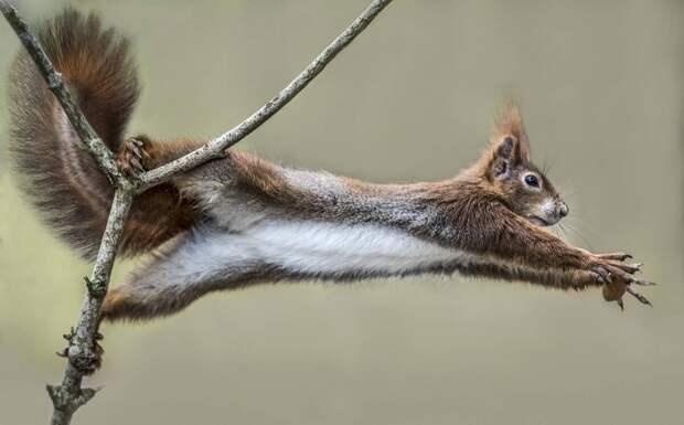 Белка хватает орех в Германии