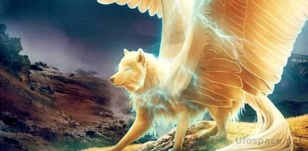 Симураны: Крылатые волки Бога Огня