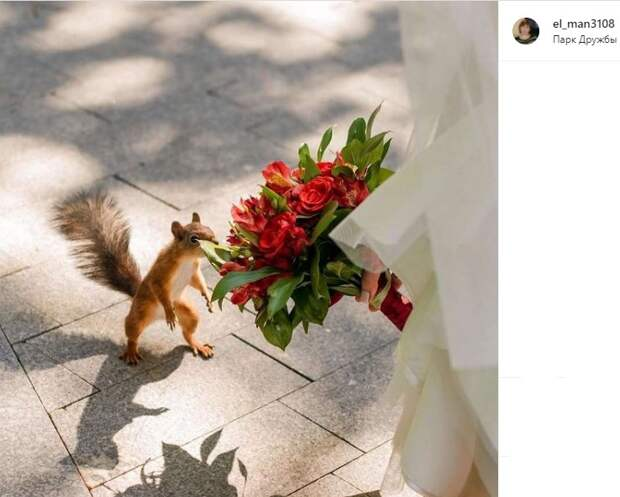 Фото дня: белка из парка Дружбы тоже хочет замуж
