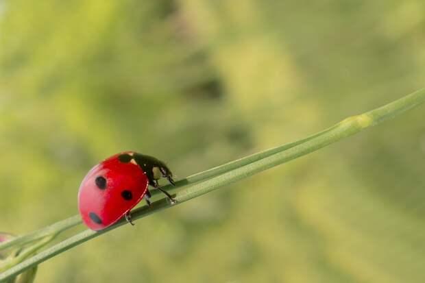 Любители природы из СВАО представят свои фотографии и рисунки на конкурс Фото с сайта pixabay.com