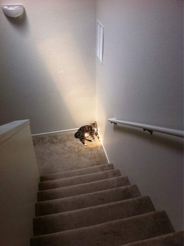 Одинокий котик любит солнце животные, котики, лучи, погреться, солнечные ванны, солнце, температура, тепло
