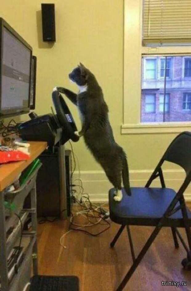 Приколы с котами (30 фото)