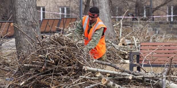 Во дворе на Степана Супруна обрезали ветви деревьев по просьбе жителей