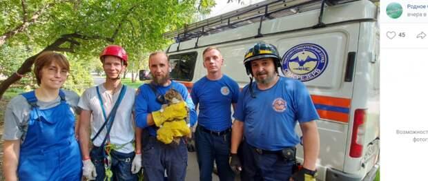 В Строгине коту спасли жизнь и дали имя