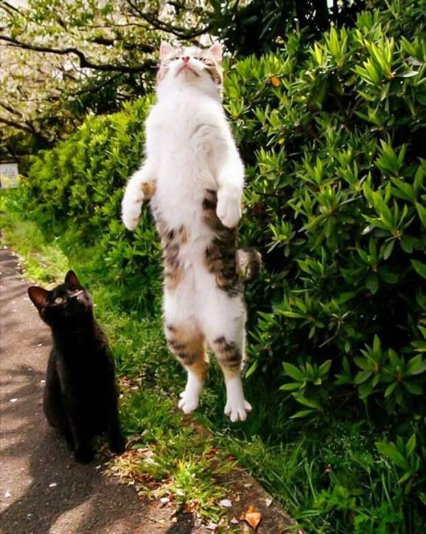 В нужном месте и в нужное время: 20 самых смешных фотографий с котами