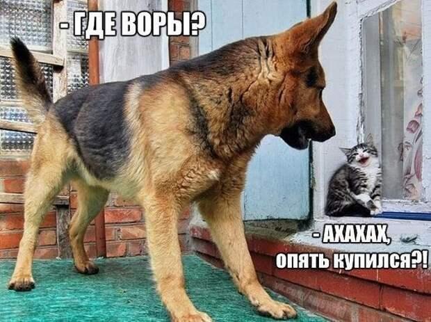 Смешные картинки с надписями для поднятия настроения (11 фото)