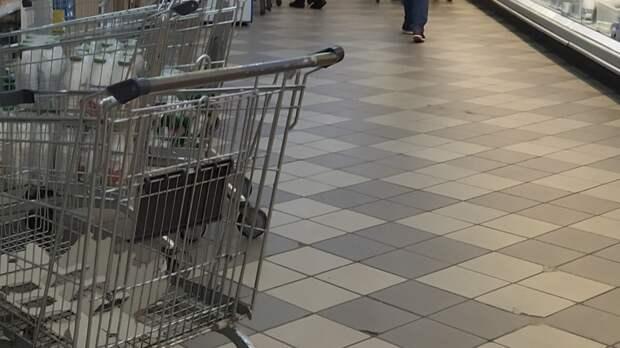 Бойцовский пес загрыз йоркширского терьера в петербургском магазине