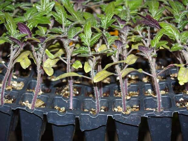 Рассадная считалочка: Как правильно выбрать время для посадки семян