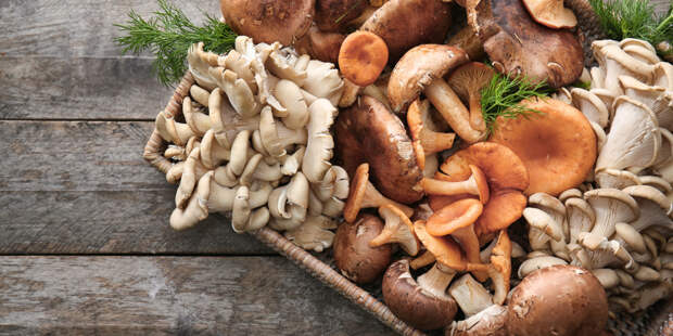 Сезон «тихой охоты» открыт: власти Подмосковья напомнили правила сбора грибов