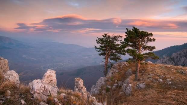 Назван размер ущерба сельскому хозяйству Крыма из-за водной блокады