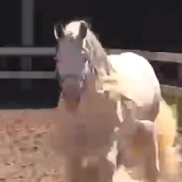 Конь переехал из Кузбасса в Москву, потому что там в него не верили. Теперь он – чемпион и...