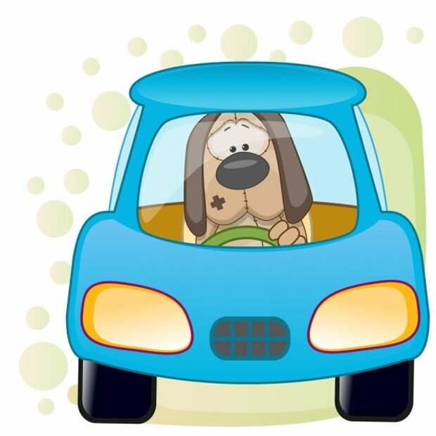 Собаку укачивает в машине: что делать?
