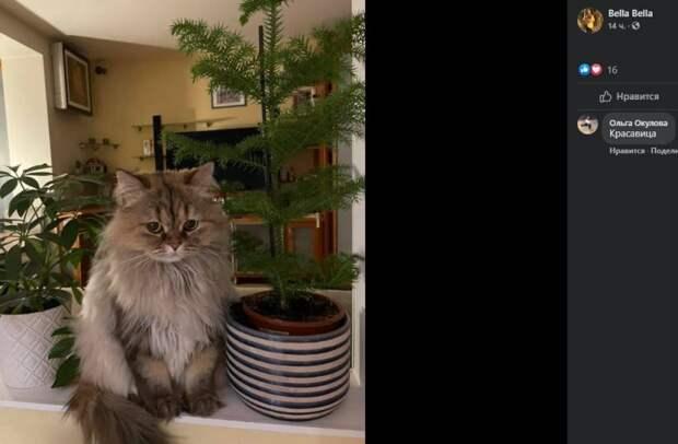 Домашняя кошка Мура разыграла хозяев в Чапаевском переулке