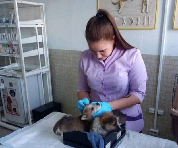 Менее, чем через сутки пушистики оказались в руках ветеринара приюта. Фото: соцсети