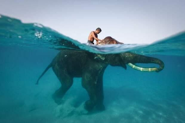 Плавающие слоны Южной и Юго-Восточной Азии
