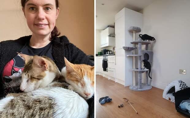 «Они живут счастливой жизнью»: фельдшер превратила дом в приют для кошек