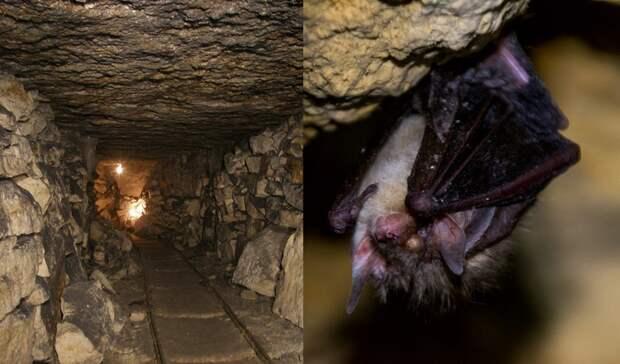 Мистика пещер. Что на самом деле происходит в Девятовских каменоломнях?