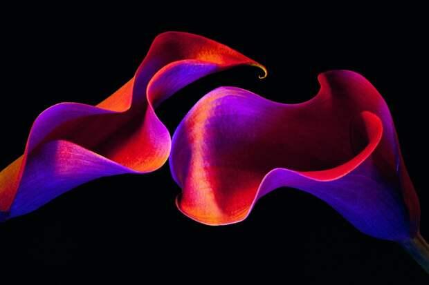 Флора: серия психоделических фотографий цветов Мэгги Уэст