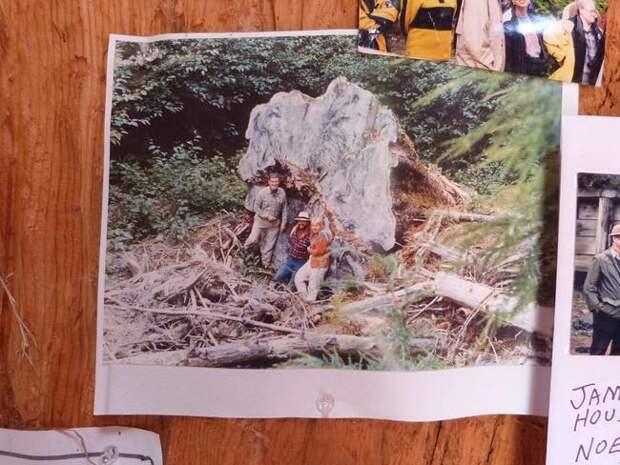 Парень 22 года вырезал домик хоббита в огромном пне домик, пень, хоббит