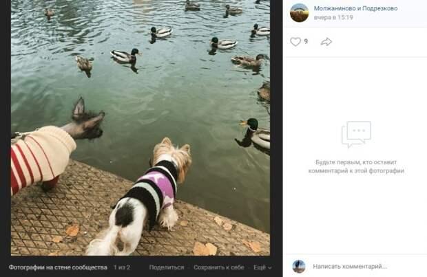 Фото дня: за утками в Молжаниновском присматривают грозные охранники