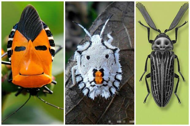 Существует около 400 тыс. известных видов жуков. Каждое четвертое из всех животных это жук.  жуки, интересное, красивое, насекомые