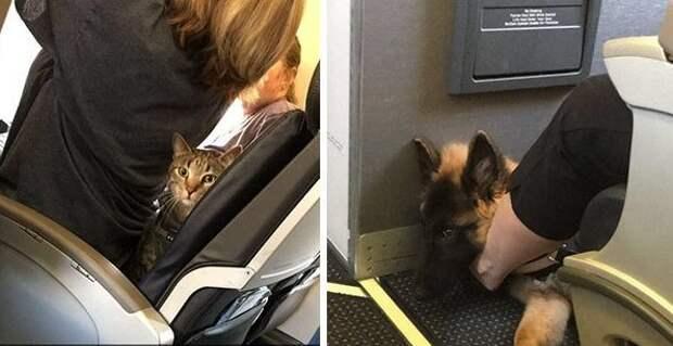 Хорошо летим... вот только с соседом не повезло! животные, забавно, летайте самолетами, мило, пассажиры, самолет, собаки, хвостатые пассажиры