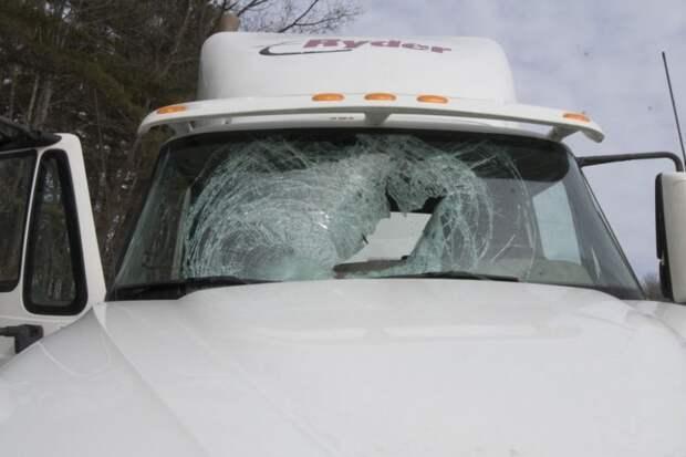 Индейка влетела в лобовое стекло грузовика авария, дтп, индейка