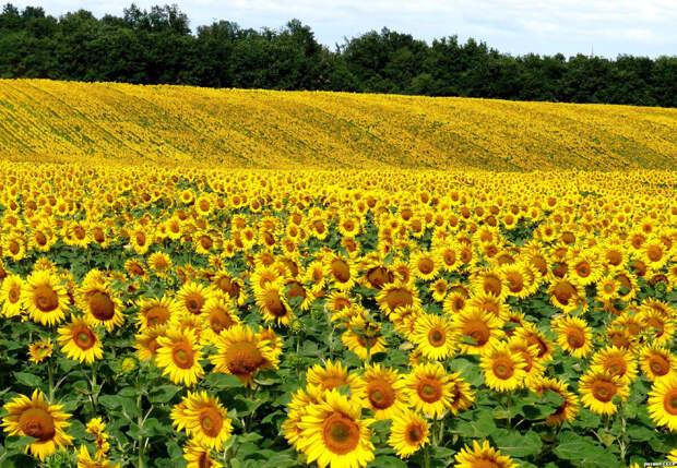 Вот такие поля окружали наше село. Это была просто невероятная красота!
