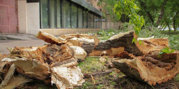 Шквалистый ветер повалил более 100 деревьев в Подмосковье