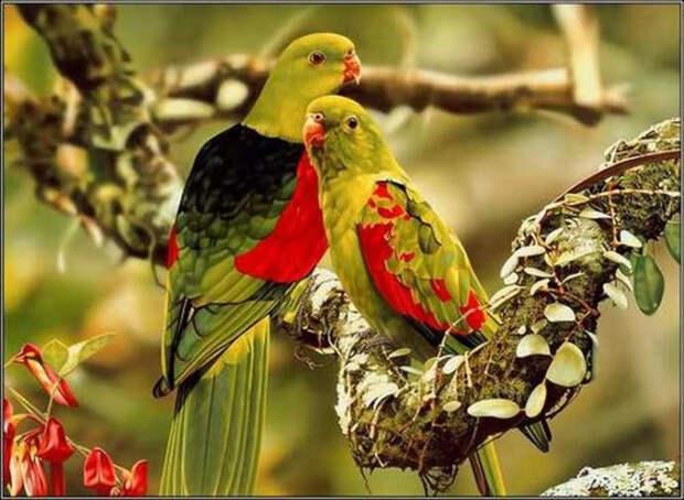 Птичьи пары