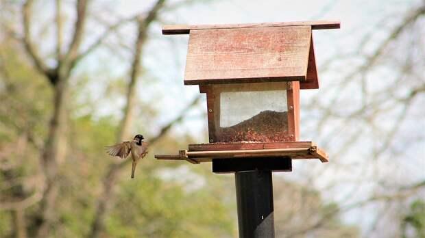 Конкурс птичьих кормушек проведут на северо-востоке столицы Фото с сайта pixabay.com