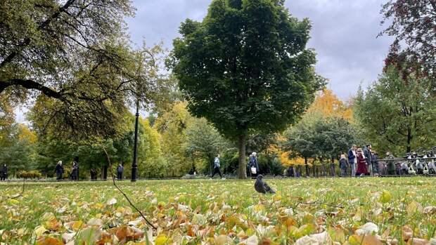 Бабье лето ожидается в Петербурге в начале октября