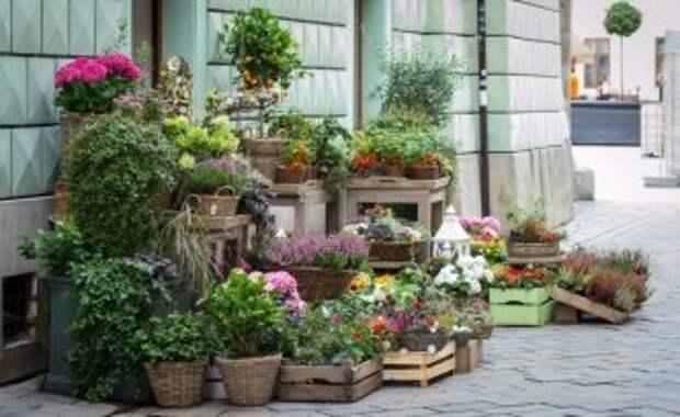 Улицы Череповца стали украшать цветочными кашпо и вазонами
