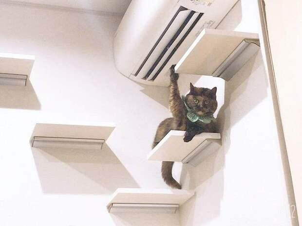 20 котов, которые толиокончательно сломались, толипрокачались донового уровня