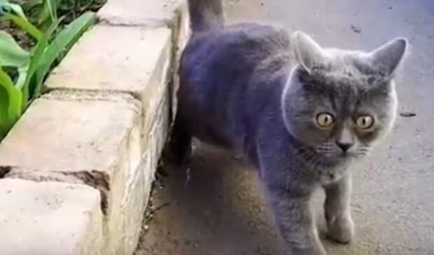 Ростовский кот судивительным взглядом стал звездой вСети