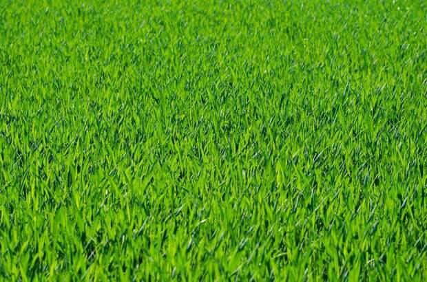 Трава, Газон, Травинки, Травяной, Лугопастбищные Угодья
