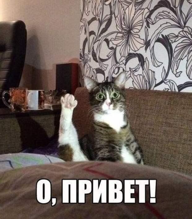 Смехопанорама от Михалыча. Отличного вам настроения!