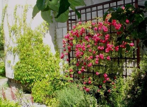 Простые и оригинальные опоры для цветов, которые можно сделать за выходные