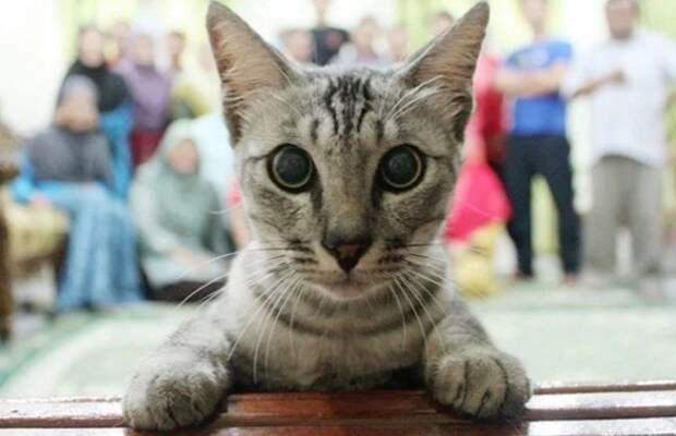 Смешные кошки, идеально испортившие фотографии (12 фото)