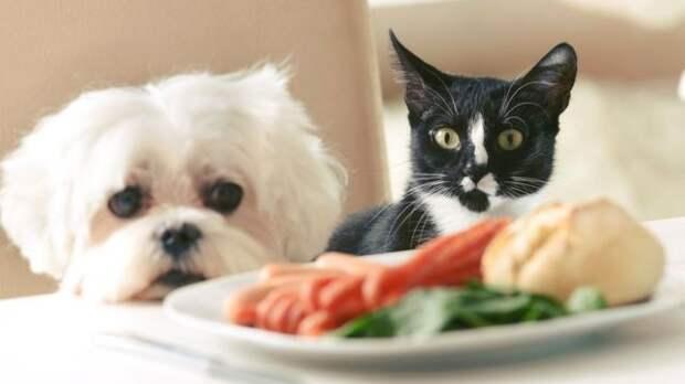 Собака и кошка смотрят на сосики на тарелке, стоящей на обеденном столе
