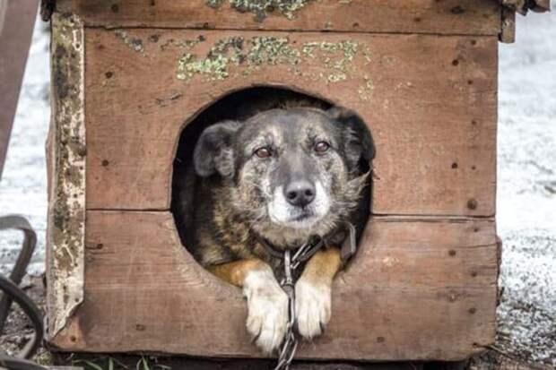 Грустная собака ждала и днём и ночью, но хозяйка так и не вернулась к ней