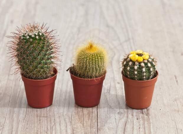 комнатные растения