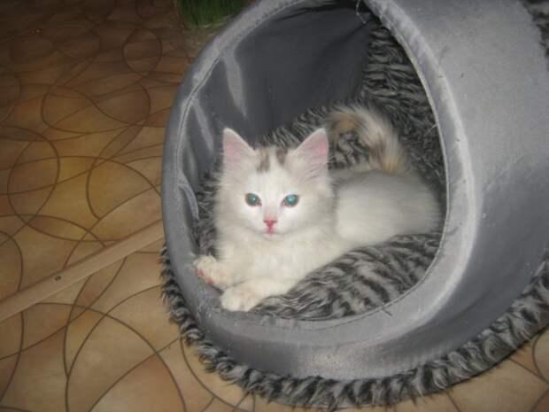 Крошечный котенок прятался от толстых крыс