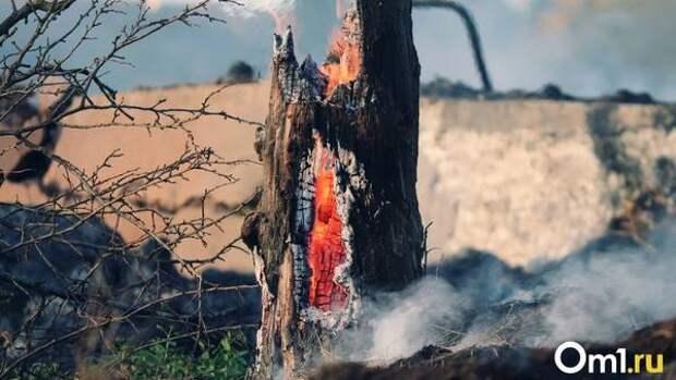Новосибирск и Омск в опасности: Рослесхоз рекомендует ввести режим ЧС из-за лесных пожаров в регионах