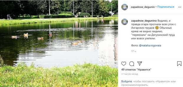Фото дня: огари на Ангарском пруду