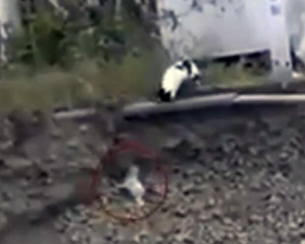 Кошка за шкирку вытащила щенка из пропасти