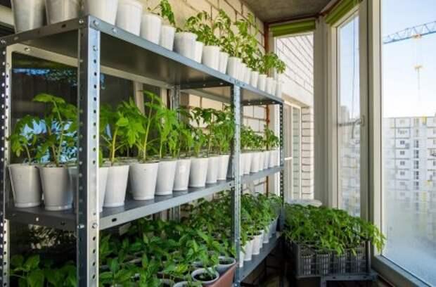 3 дела, которые надо успеть до посева семян на рассаду