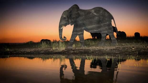 Снимки дикой природы