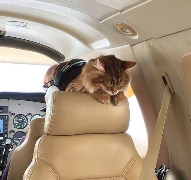 Наконец-то я нашел удобное место, чтобы поспать! животные, забавно, летайте самолетами, мило, пассажиры, самолет, собаки, хвостатые пассажиры
