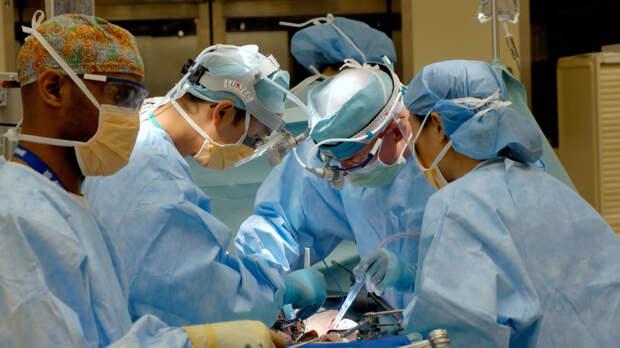 Свиную почку впервые трансплантировали человеку